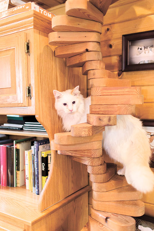 Delightful STAIRWAY. A Cat Stairway Can Provide On And Off Ramps For A Cat  Superhighway.