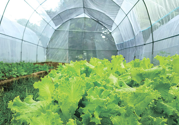 "Greenhouse in ""Hardin ni Milagros"""