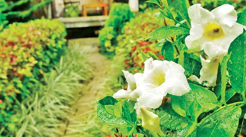 Flower Gardens in Cebu